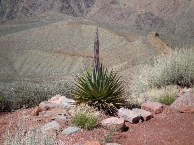 grand-canyon8