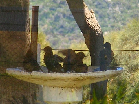 Birds bathing and playing