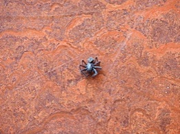 Sun room spider